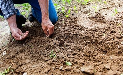 Obst selbst anbauen Garten